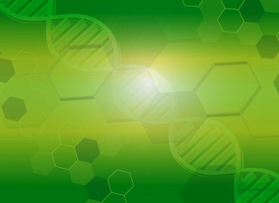 細胞のイメージ
